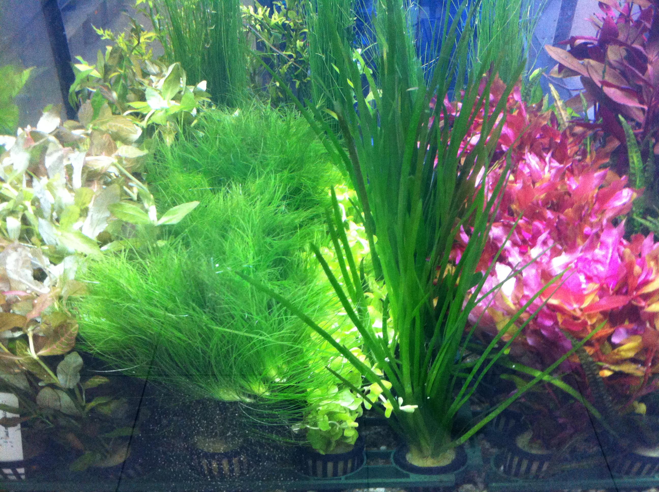 Acuarios tropicales agua dulce acuarios verdemar for Plantas de acuario