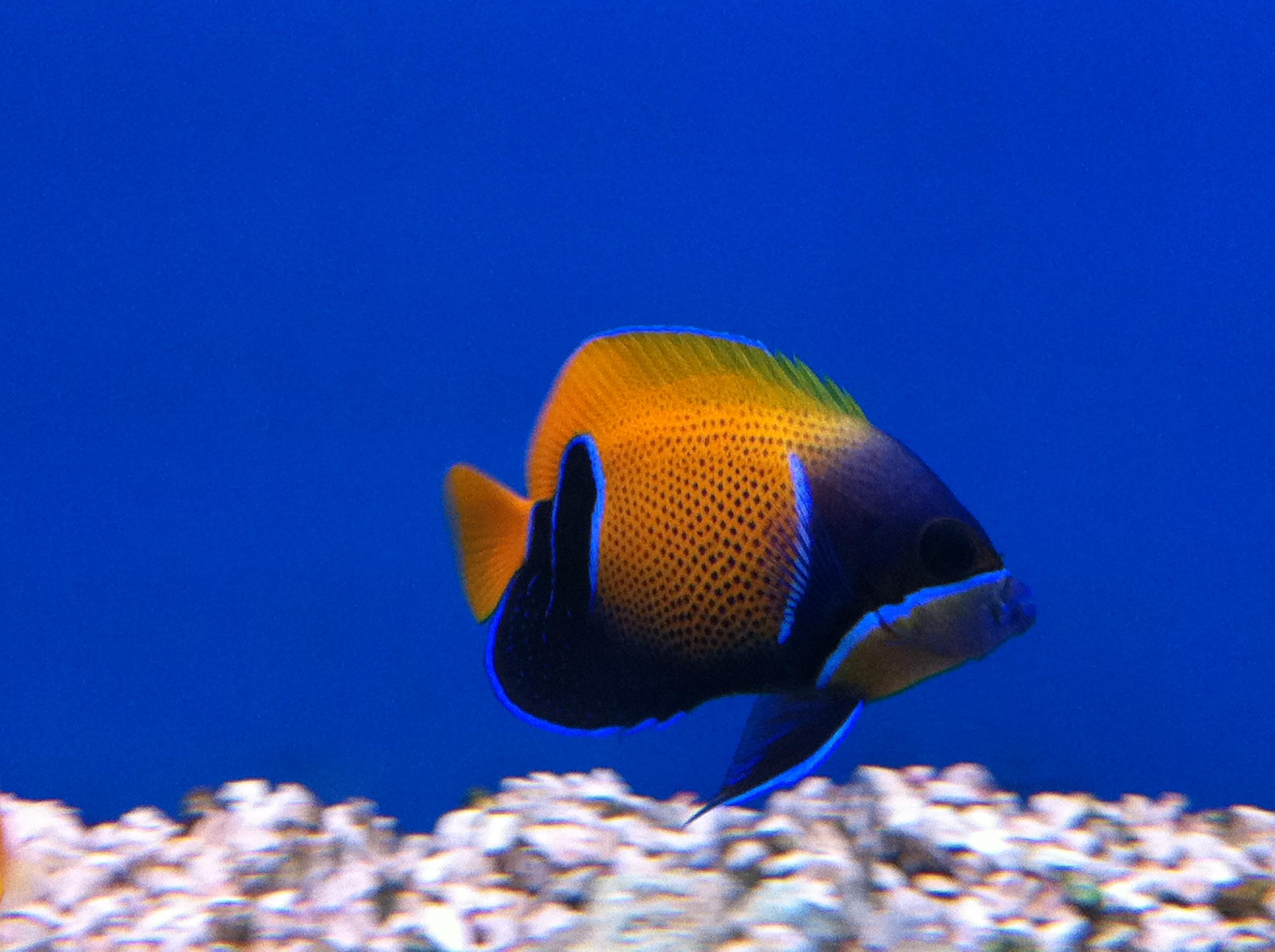 Acuarios de marino agua salada acuarios verdemar for Peces tropicales