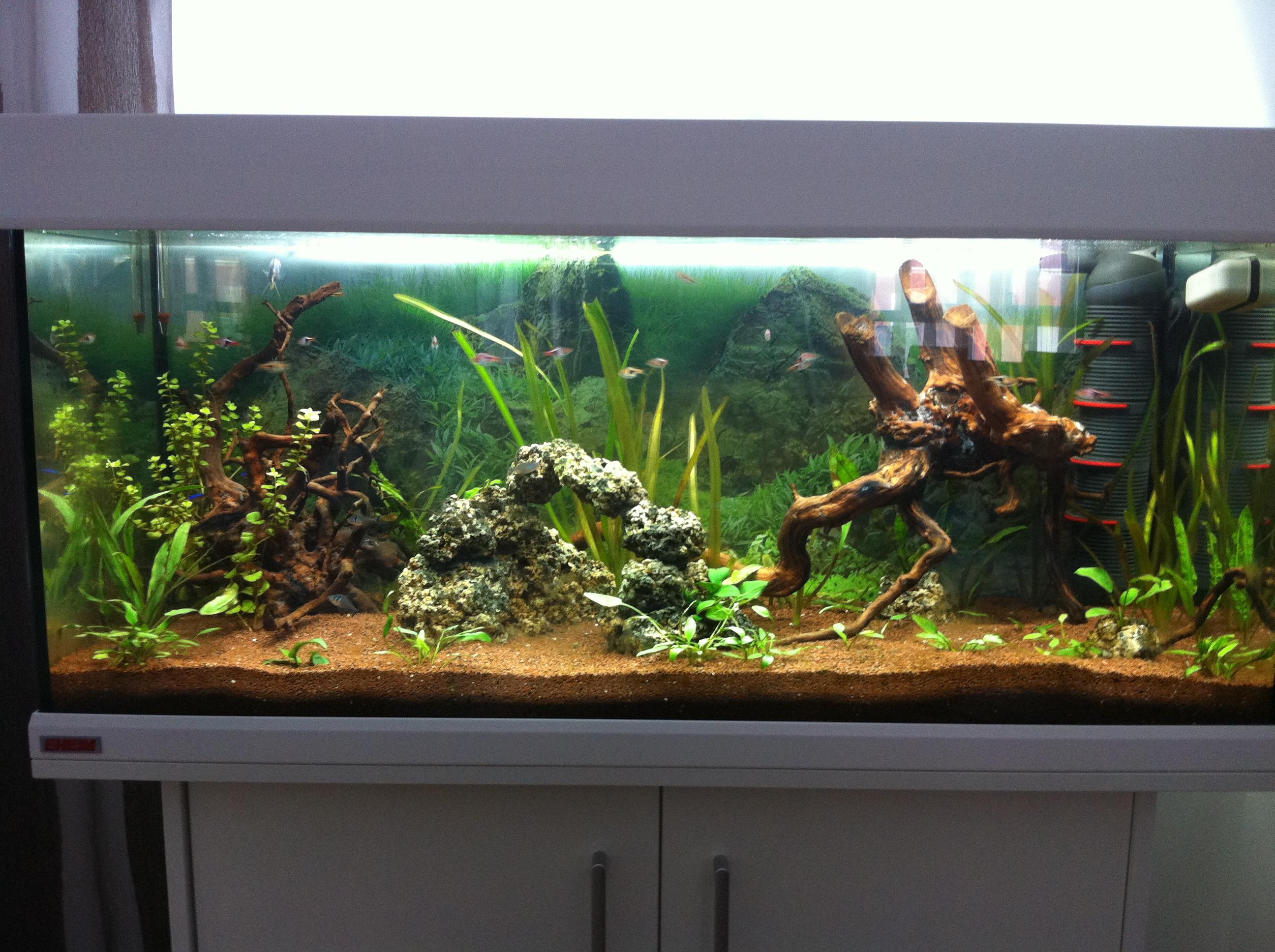 Y de agua dulce acuarios verdemar - Montaje de acuarios ...