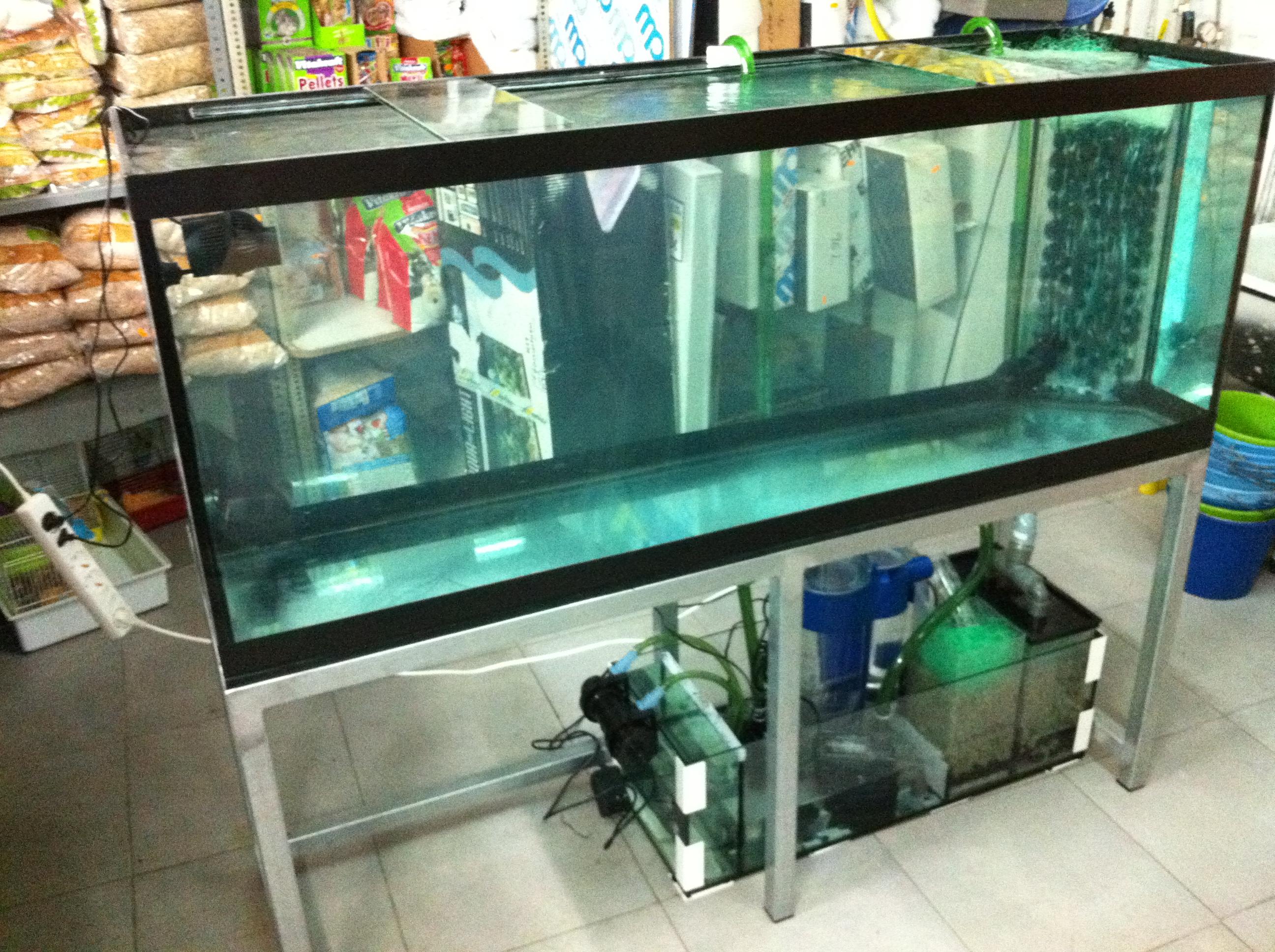 Preparamos acuarios de agua salada acuarios verdemar - Montaje de acuarios ...