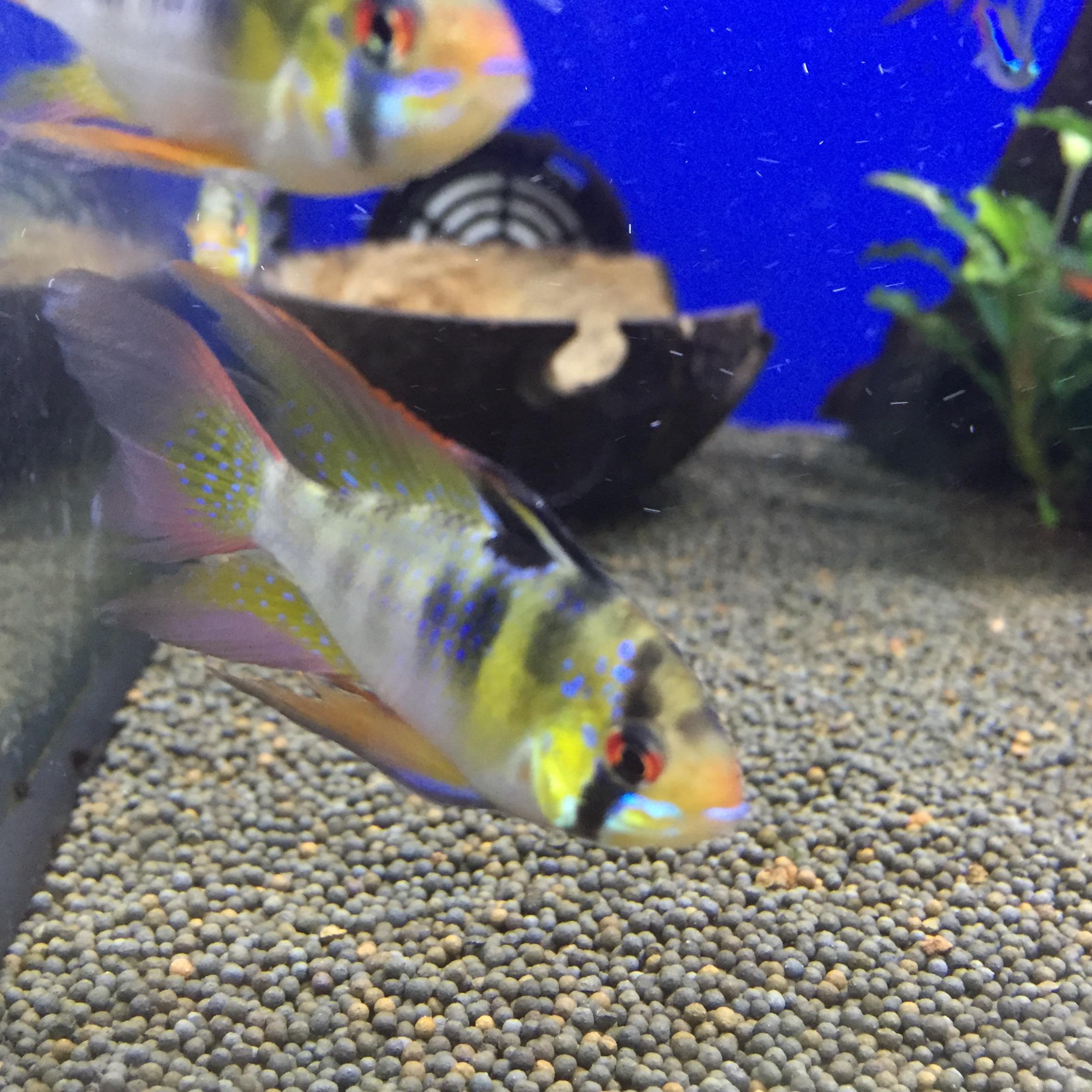 Nueva llegada de peces tropicales de rep checa for Peces tropicales acuario