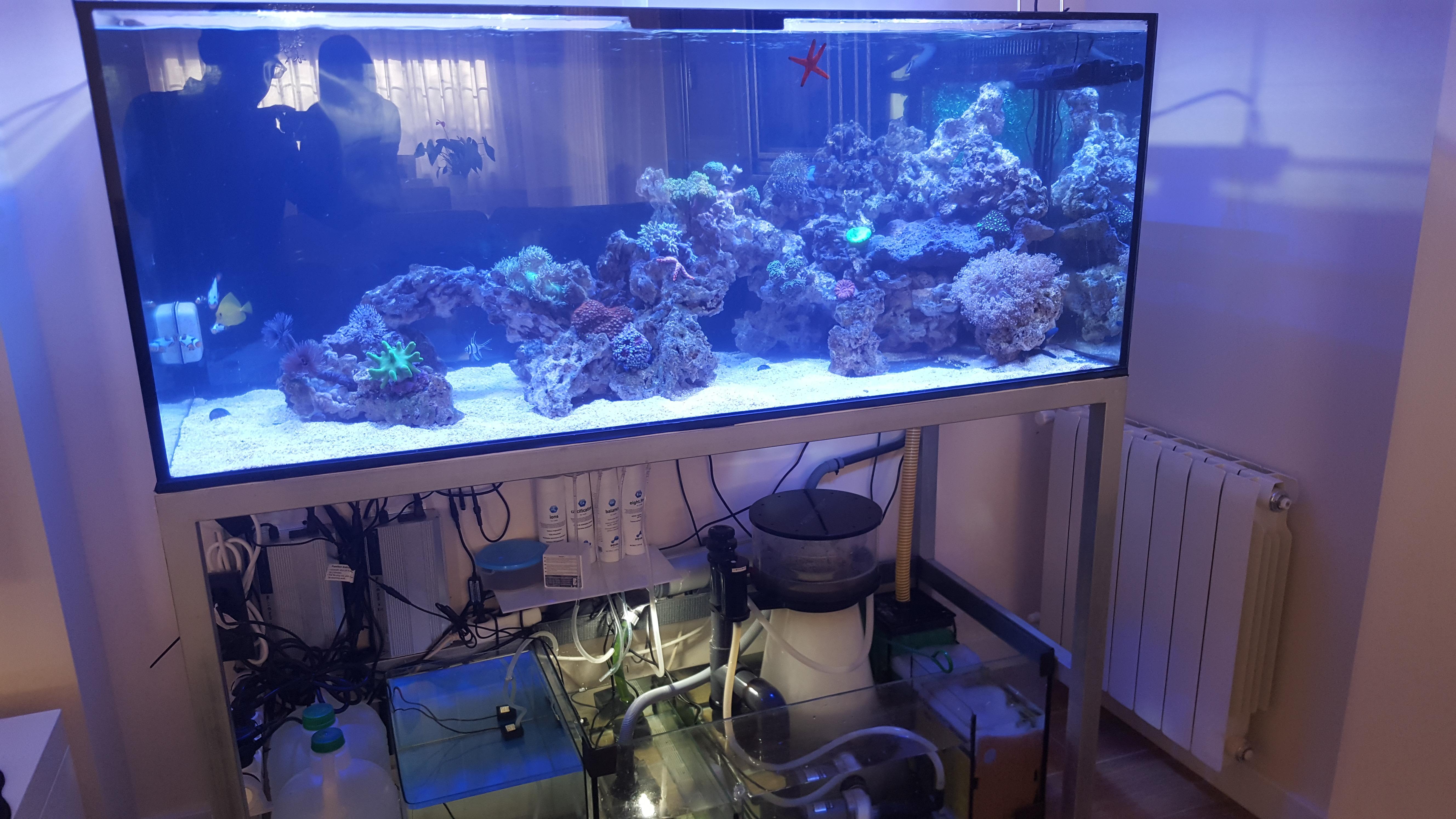 Acuario marino de 435 l acuarios verdemar for Accesorios para acuarios marinos