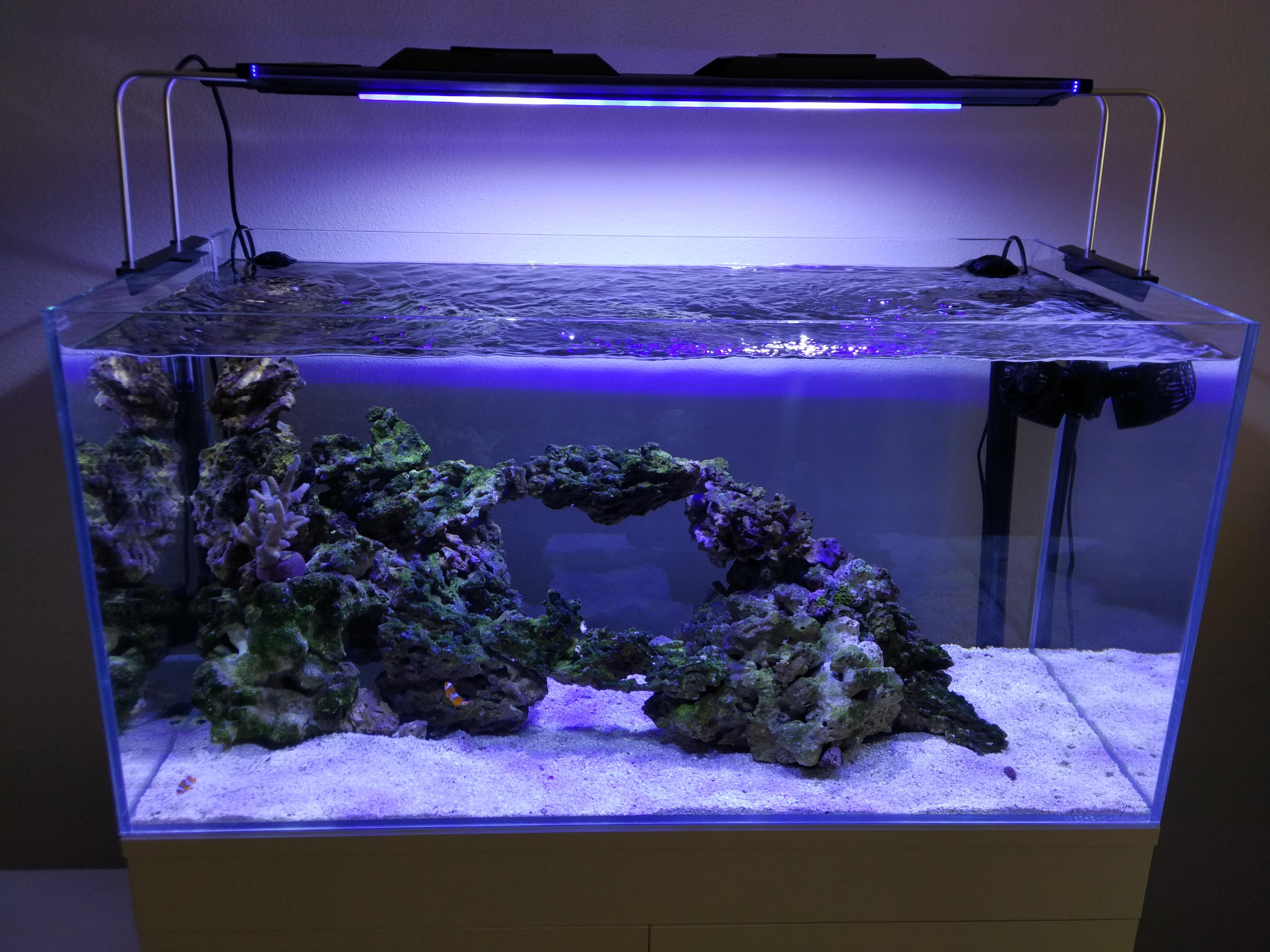 Acuario marino de 250l acuarios verdemar for Accesorios para acuarios marinos