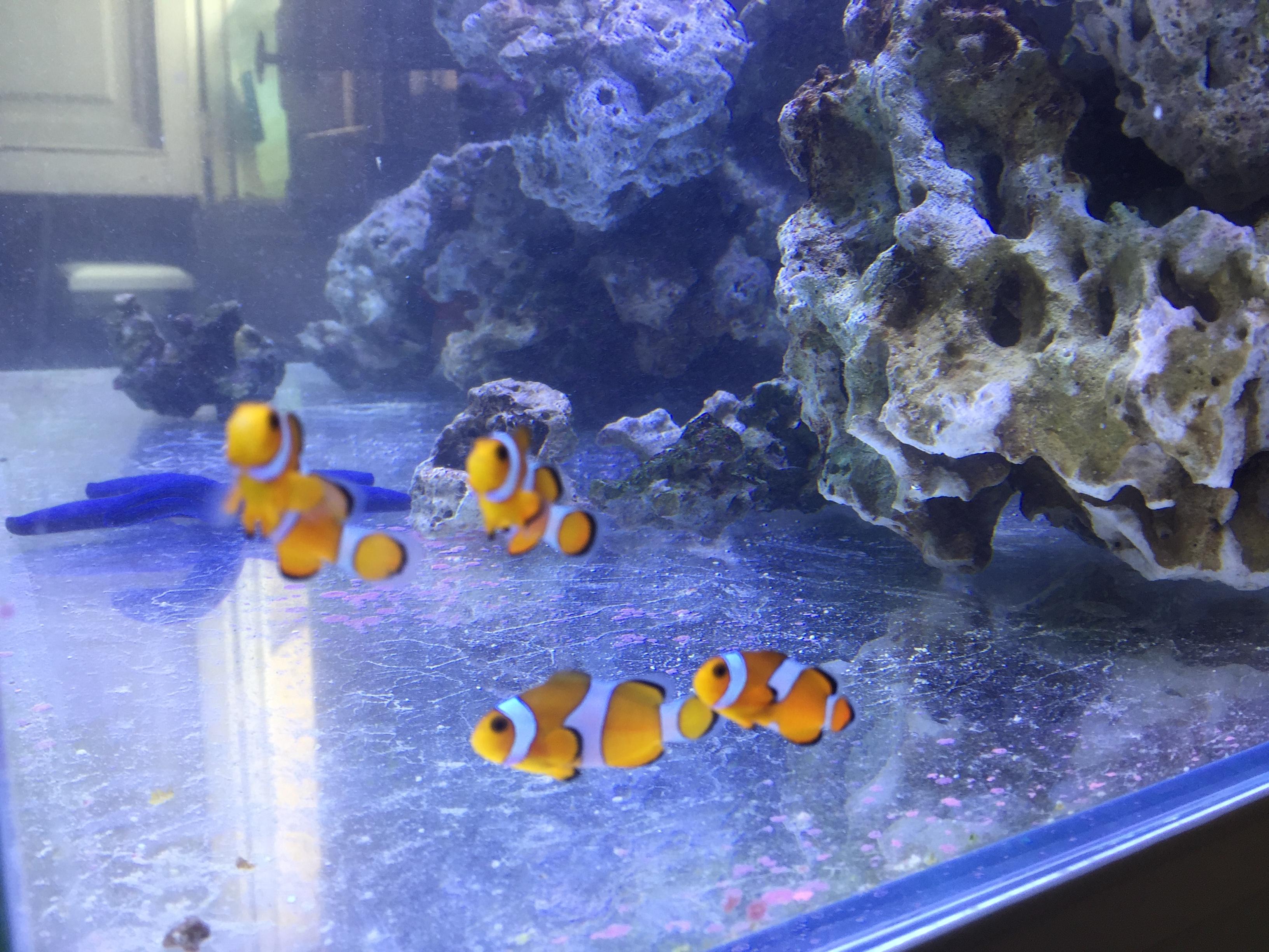 Acuario marino de 250 l acuarios verdemar - Acuario en casa ...