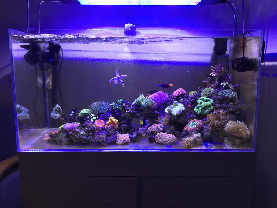 Acuario marino de 250 l acuarios verdemar for Accesorios para acuarios marinos