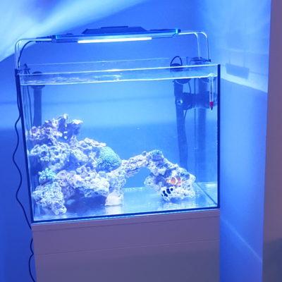 Imagen general del acuario