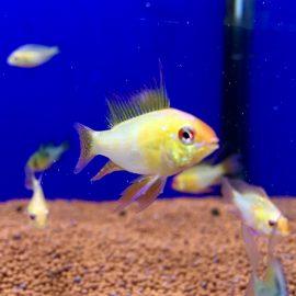 Nueva llegada de peces tropicales desde Rep. Checa 09.05
