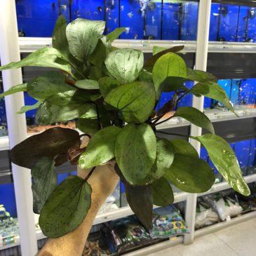 Nueva llegada de plantas acuáticas 24.10