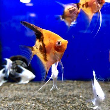 Nueva llegada de peces tropicales 06.11.18