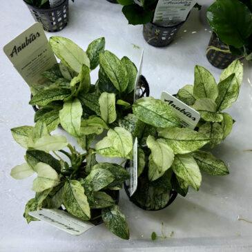 Nueva llegada de plantas acuáticas en Acuarios Verdemar 13.12