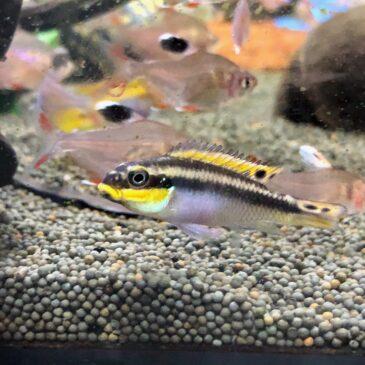 Nueva llegada de peces tropicales 15.01