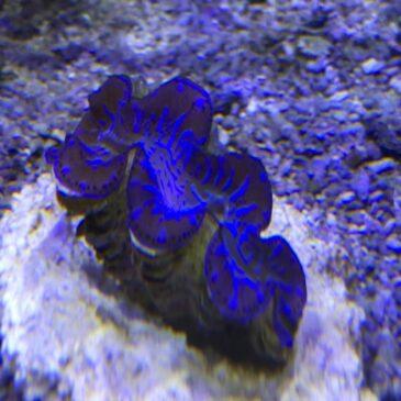 Nueva llegada de Marino! Especial Corales!