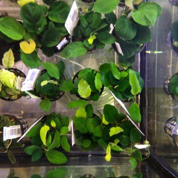 Nueva llegada de plantas acuáticas 01.02