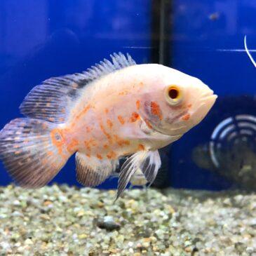 Nueva llegada de peces tropicales desde Rep. Checa 05.02