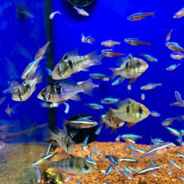 Nueva llegada de peces tropicales en Acuarios Verdemar! 26.02.19