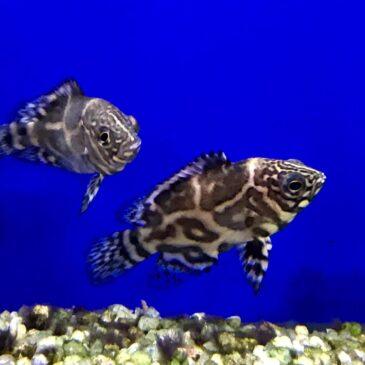 Nueva llegada de peces tropicales en Acuarios Verdemar 06.06.19