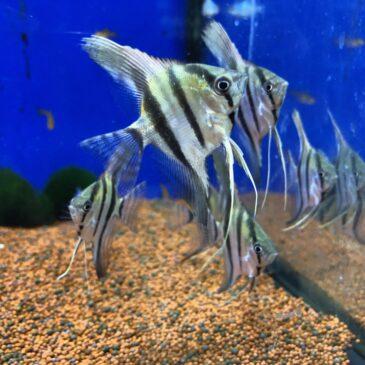 Nueva llegada de peces tropicales desde Rep. Checa 26.06.19