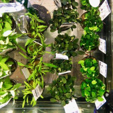 Nueva entrada de plantas acuáticas