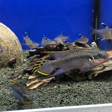 Nueva llegada de peces tropicales desde Rep.Checa 03.10