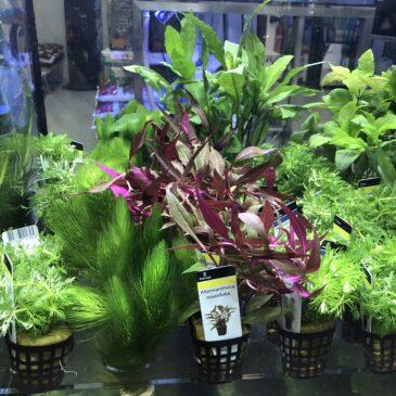 Nueva llegada de plantas acuáticas 23.10.19