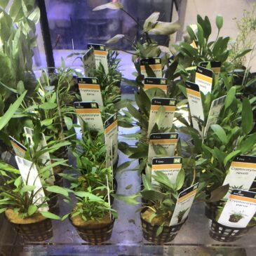 Nueva llegada de plantas acuáticas