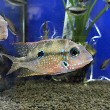 Nueva entrada de peces tropicales desde Rep.Checa 13.11.19