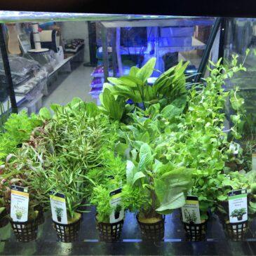 Nueva entrada de plantas acuáticas 20.11.19