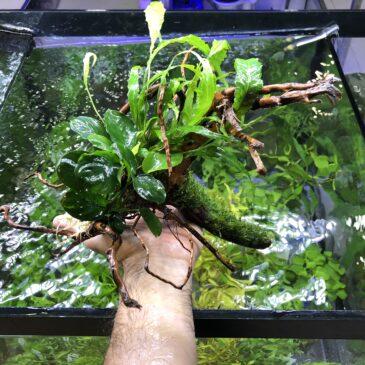 Nueva llegada de plantas acuáticas 11.12.19